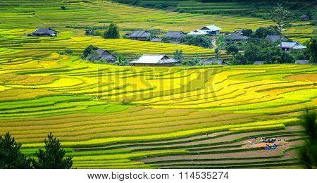 The beauty of terraced fields Tu Le, Yen Bai, Vietnam