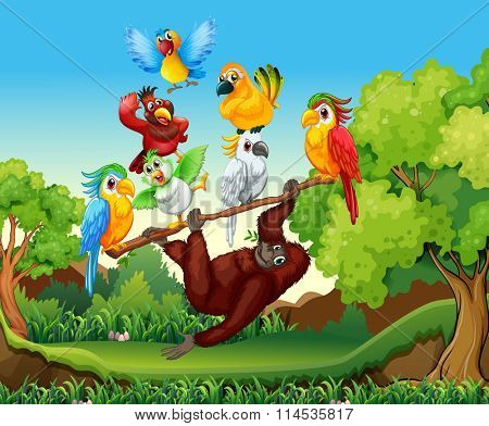Wild birds and urangutan in the forest illustration