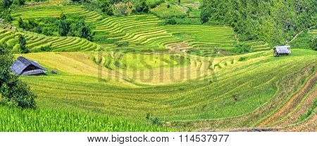 Terraced fields and houses