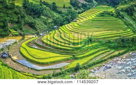 Terraced fields shaped shoe small river