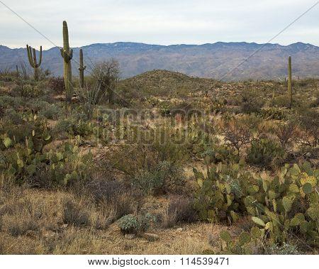 Southern Arizona Landscape