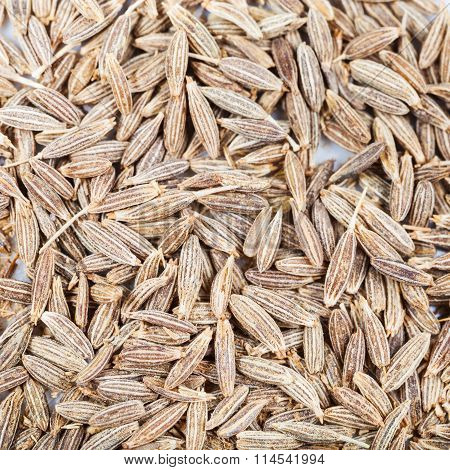 Dried Cumin (cummin) Spice Seeds Close Up