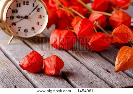 Gooseberry Blooms On Grey Board With Alarm Clock