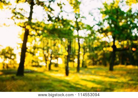 Abstract Summer Spring Natural Blurred Forest Background. Bokeh,