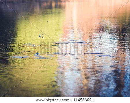 Frozen Pond with Water Lilies and Colorful Ice Background