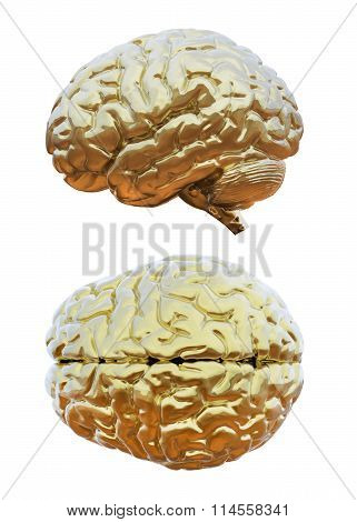 Human brain golden