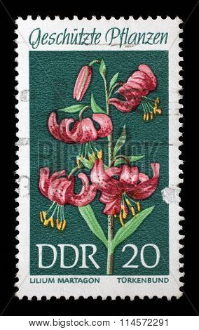 GDR-CIRCA 1969: A stamp printed in the DDR (East Germany) shows Protected Plants Martagon Lily, Lilium martagon, circa 1969