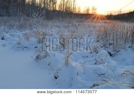 The Rays Of The Sun At Sunrise In A White Forest Woodland
