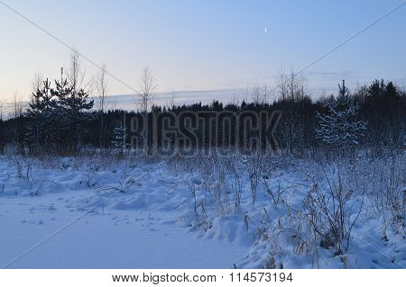 The Cold Winter Nature White Snow Forest Under The Moon