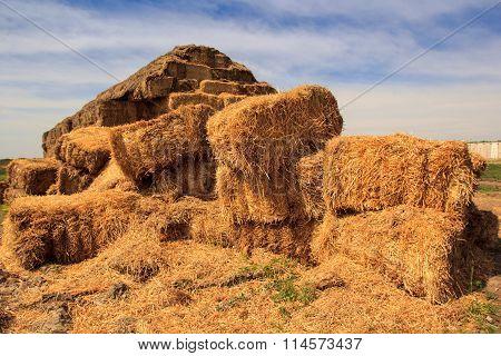 Closeup Separate Stacks Of Large Industrial Haystack