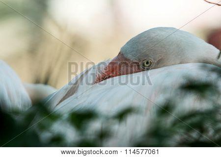 Flamingo eye's