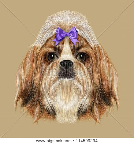 Shih Tzu Dog Portrait. Illustration