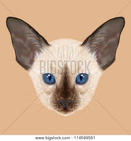 Siamese Kitten. Illustration