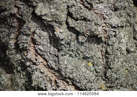 Background from tree bark