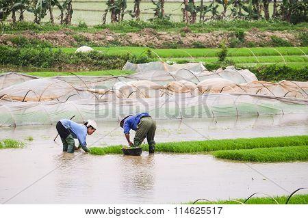 Vietnam farmer