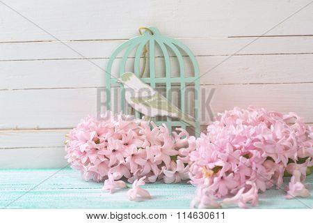 Postcard With Fresh Flowers Hyacynths  And Bird