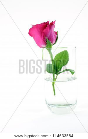 Close Red Rose In Glass And White Background