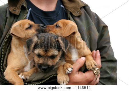 Kissing Puppies