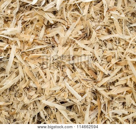 Wet Sawdust Closeup