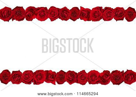 roses lines white background