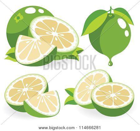 White Grapefruits Vector Illustrations