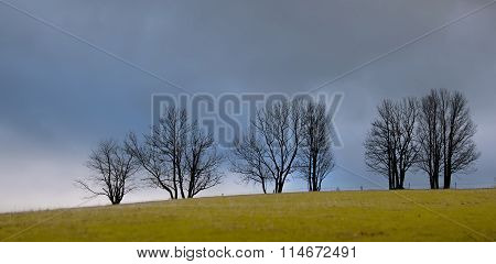 Morning Tree Atop A Hill, Cloudy Sky Over The Clearing.