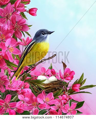 Little Yellow Bird Near The Nest On The Background Of A Flowering Paradise Red Apple