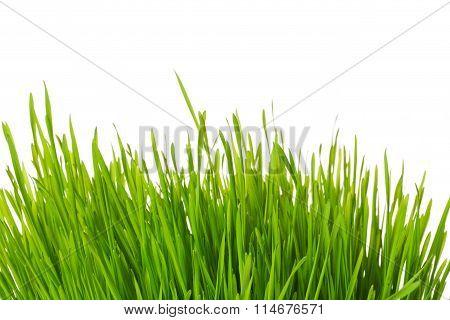 Tuft of grass