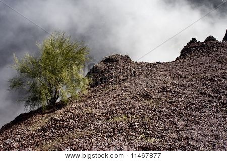 A shrub at the edge of the crater of Vesuvius.