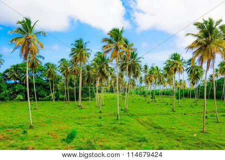 Building Green Palm Plant