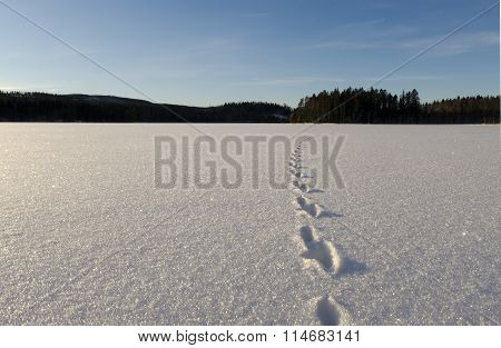 Track In Snow