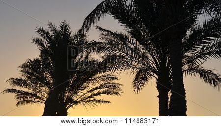 Palm Trees Outlines