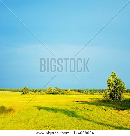 Evening Summer Landscape