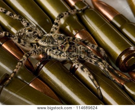 Cartridges Protected By Spider