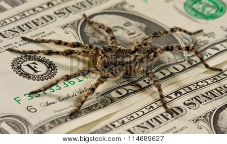 Spider Creepy On Bank Notes, Money And Danger Concept