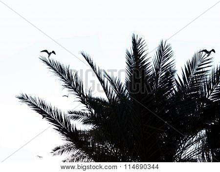 Birds In Palm Tree Branches