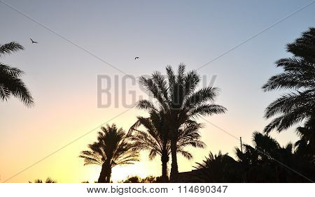 Tropical Landscape With Palm Trees At Sunrise