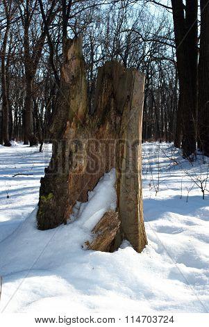 Old Stump Broken Tree