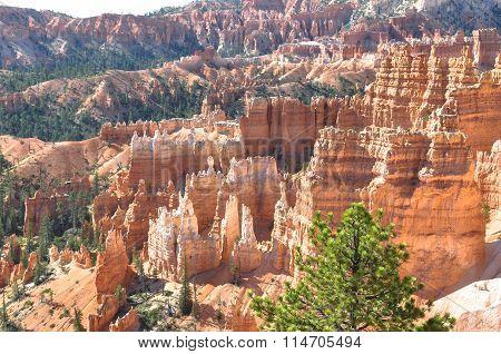 Hoodoos in Bryce Canyon, Utah