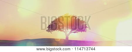 3D render of a sunset tree landscape in widescreen with retro effect