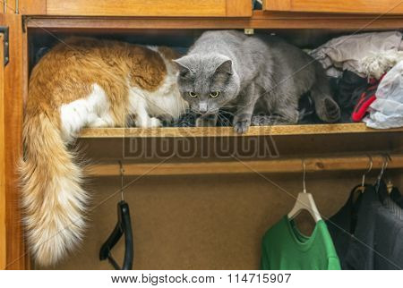 Two Cats In Closet