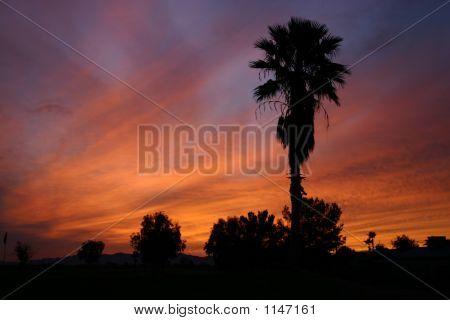 Esplendor de Arizona
