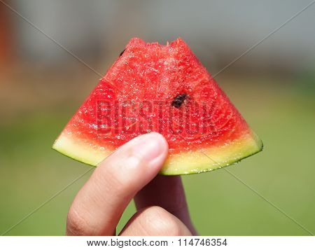 Water melon slices as a background, Thailand