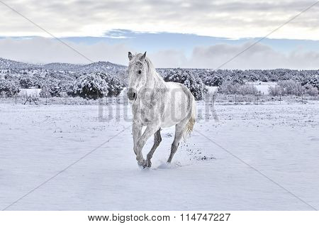Horse Cantering In Snow