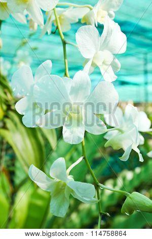 Beautiful Orchid In Garden