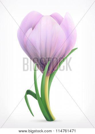 Snowdrop, spring flower vector icon