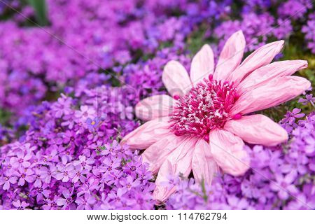 Sea Of Pink Petals With A Imitation Flower