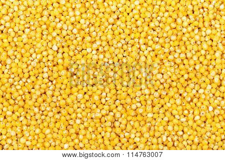 Many Raw Yellow Millet Groats