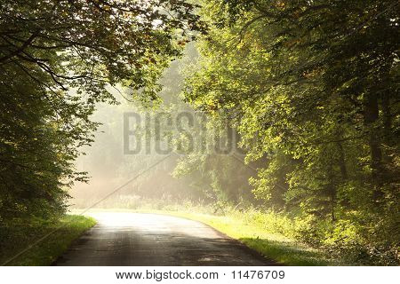 Rural road in misty autumn forest at dawn