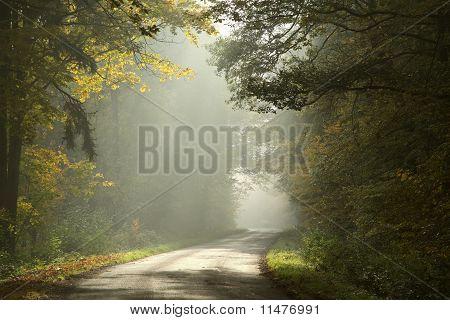 Landstraße im Herbst Wald im Morgengrauen